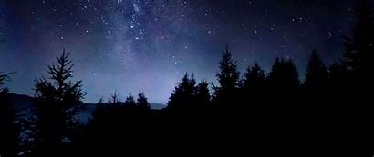 Sky Night Starry Stars Dark Trees Background