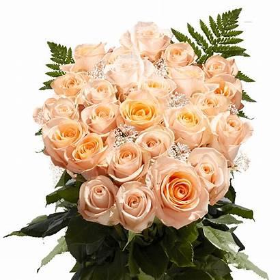 Roses Peach Rose Dozen Huge Bouquets Greenery