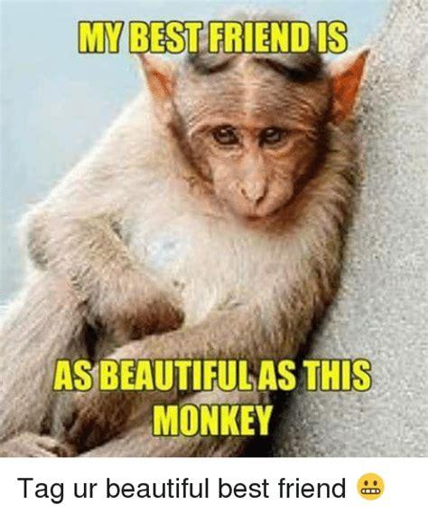 Meme Monkey - monkey makeup meme mugeek vidalondon