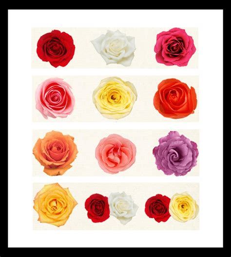 roses colors meaning meaning of roses colors flowers in the box