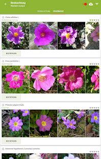 pflanzen bestimmen 3 apps zur pflanzenerkennung giga