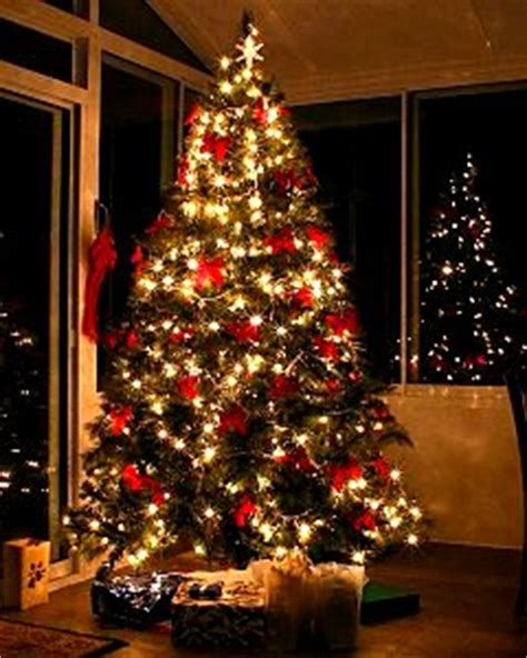 christmas trees uk grown cut fresh  order uk home
