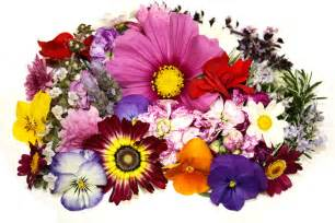 edible flower garnish premium flowers assortment