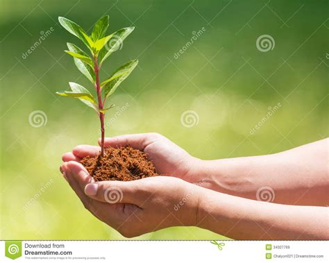 Hand Holding And Planting New Tree Stock Image Image