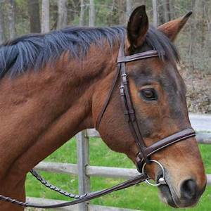 Red Barn Fusion Horse Bridle by KL Select