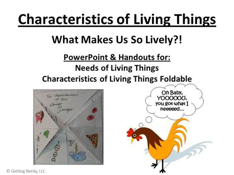 characteristics of cuisine what are the needs and characteristics of living things