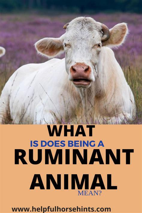 horses ruminants animals helpfulhorsehints animal chew ruminant digest