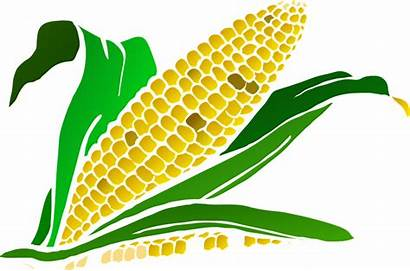 Agriculture Clipart Crop Corn Plant Clipartmag