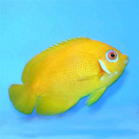 Uv Sterilizer Aquarium Ich