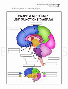 Parts Of The Brain And Their Functions Worksheet