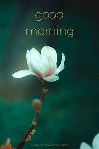 60 Beautiful Flower Images with Inspiring Good Morning Quotes - Part 2