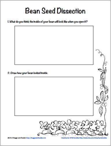 HD wallpapers how seeds grow worksheets kindergarten