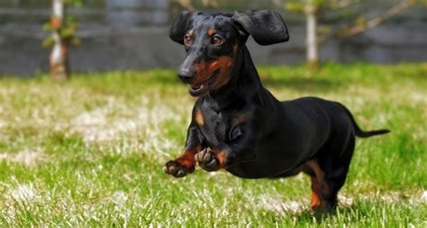 What Are The Best Dogs With Cats  Breeds