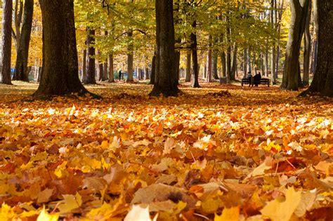 Polish Autumn - Visit Poland DMC