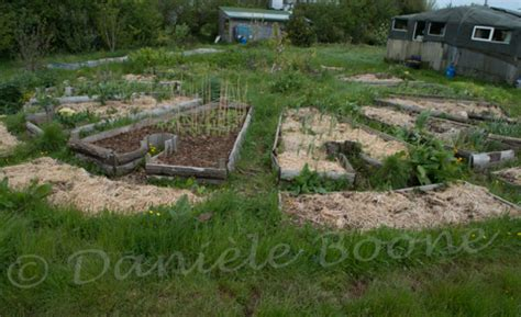 permaculture on pinterest permaculture design wattle