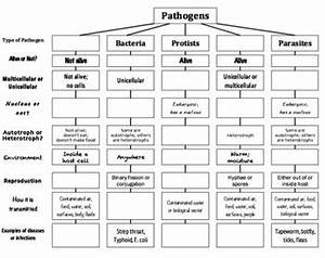Pathogens Top Down Chart Concept Map By Owensscience