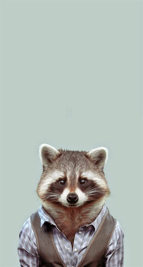 iphone raccoon hd portraits zoo plus common wallpapers yago animals portal animal cute would iphonewalls amazing px