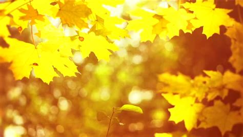 Fall Backgrounds Yellow by Autumn Yellow Blurred Fall Autumnal Background With