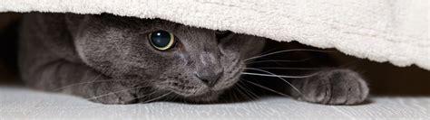 meine katze versteckt sich erfahren sie mehr ueber die