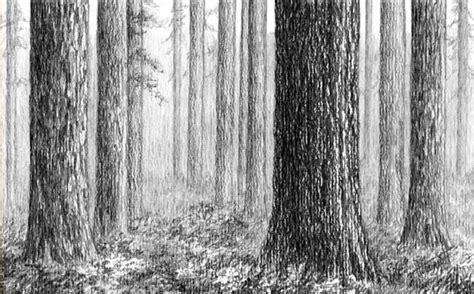 Wald Mit Bleistift Zeichnen