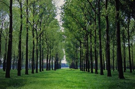 Road Through A Green Forest With Old Trees  Stock Photo