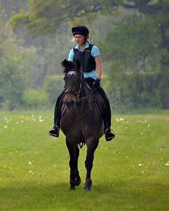 how to choose horse insurance horse insurance specialists horse and rider insurance direct
