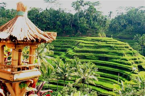 indahnya panorama desa ubud  indah  asri