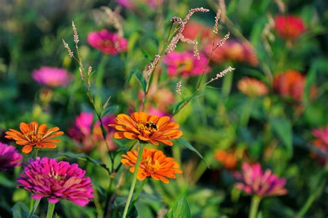 annual plant definition what is an annual flower or plant definition