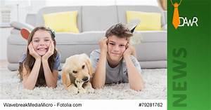 Vermieter Verbietet Hund : dawr vermieter d rfen das halten von hunden und katzen ~ Lizthompson.info Haus und Dekorationen
