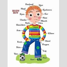 Body Parts  Learn And Practise Vocabulary