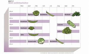 Blumenkohl Pflanzen Abstand : einfache mischkultur f r hoch und gartenbeete bioterra biogarten ~ Whattoseeinmadrid.com Haus und Dekorationen