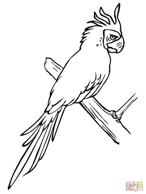 Coloring Foto by Parakeet Perched On A Tree Coloring Page Free Printable