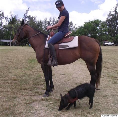 horse pig wilma she horses thinks wild polo shes huffpost