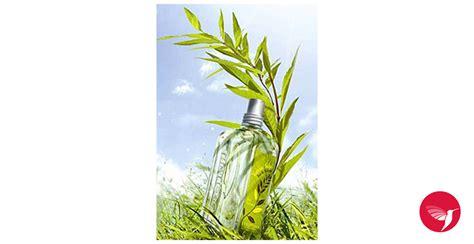 l occitane en provence si e social verbena sun l occitane en provence perfume una fragancia