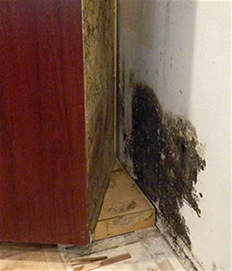 How To Get Rid Of Black Mold Under Kitchen Sink Or In Cabinets. 2nd Living Room Ideas. Decorative Mirrors For Living Room India. Home Interior Ideas For Living Room. Behr Neutral Paint Colors For Living Room. Lounging Chairs Living Room. Small Living Room Table Ideas. Living Room Designs With Wood Burner. North Shore Leather Living Room Set