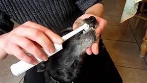 Video Pour Chien : brosse dent lectrique pour chien youtube ~ Medecine-chirurgie-esthetiques.com Avis de Voitures