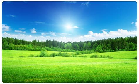 gruene wiese wald sonne baeume natur wandtattoo wandsticker