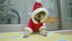 Christmas Animals GIF by Cheezburger - Find & Share on GIPHY