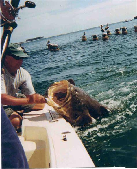 randy grouper goliath mouth beach tampa apollo favorite fishing bay knowles captain