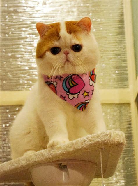 snoopy  cat  pics funnycom