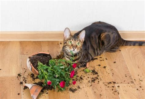 In this guide accidental damage cover for landlords and tenants is accidental damage buildings insurance worth it? Accidental Damage Benefit » The Pet Insurance Guide
