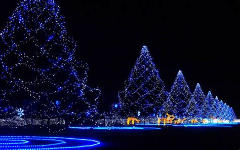 christmas lights in trees christmas trees covered in lights wallpaper 1070138