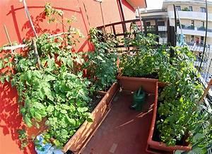 Tomaten Balkon Kübel : gem seanbau am balkon ~ Yasmunasinghe.com Haus und Dekorationen