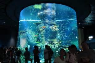World Biggest Aquarium Fish