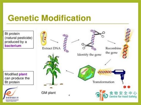 Modification Genetic Organisms by Gmo Genetically Modified Organisms Agricultural And