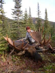 canadian moose hunts skeena mountian outfitters bc