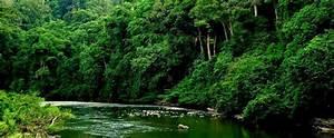 Reviews - Borneo Rainforest Lodge