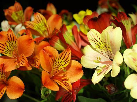 flowers in season what s blooming now october flowers in season