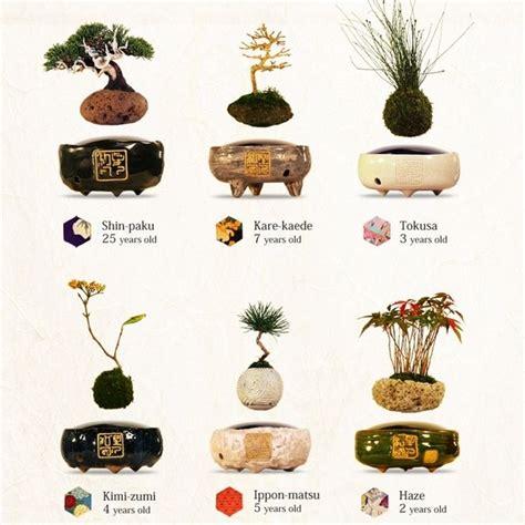 levitating bonsai plants magnetic energy