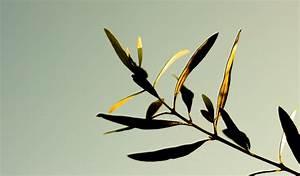 Bambus Braune Blätter : warum hat mein bambus gelbe bl tter bambus freunde ~ Frokenaadalensverden.com Haus und Dekorationen